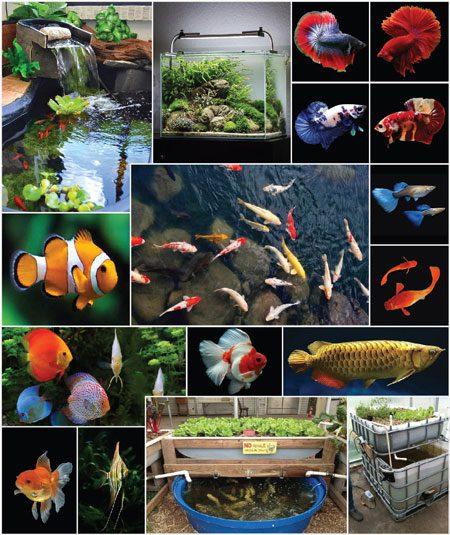 LivePro phù hợp với tất cả các dòng cá cảnh