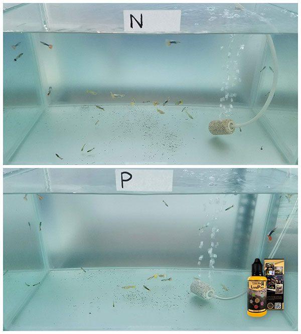 So sánh kết quả sử dụng vi sinh sống LivePro - Ngày 1